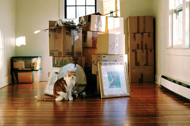 Moving with Pets - Vancouver - Small Moves